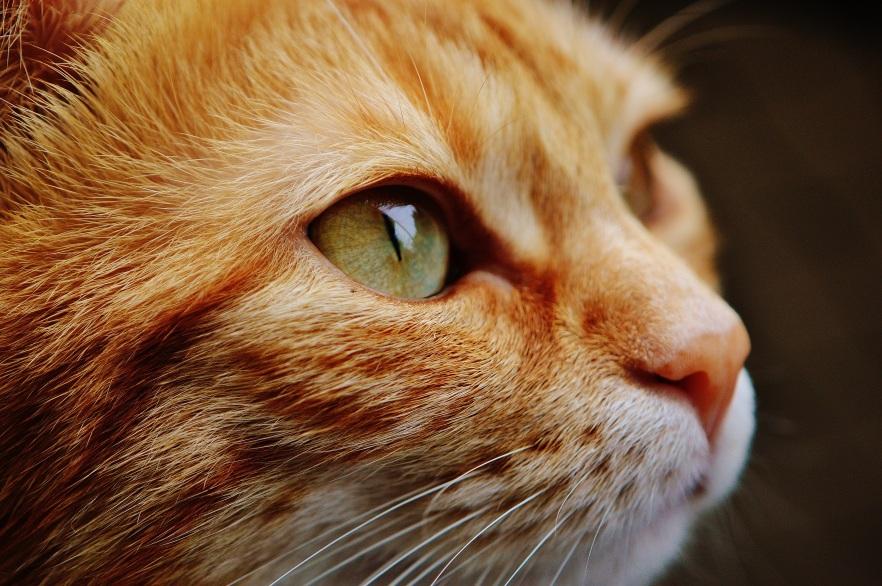 abuela_cat