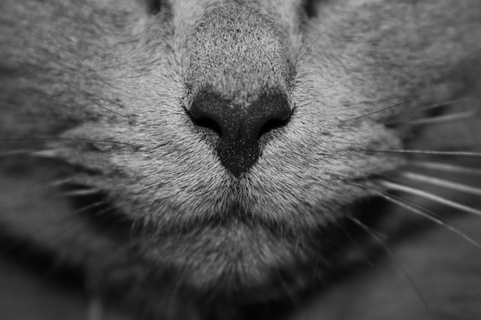 gray_cat_face
