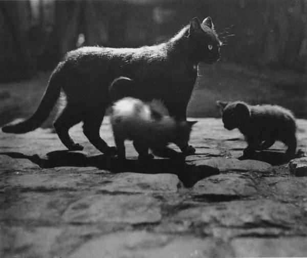 Brassai-cat-with-kittens